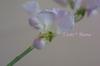 Img_0128_4