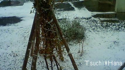 うっすら雪化粧